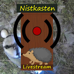 Nistkasten Livestream