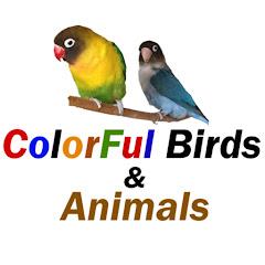 ColorFul Birds & Animals