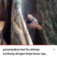 SUANGGI kayu