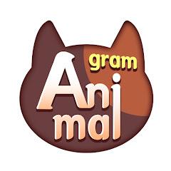 Animalgram 애니멀그램