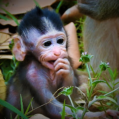 Sweet baby Monkey