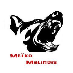Meïko Malinois