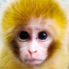 Newly Monkey Tube