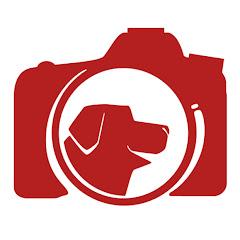 Fotógrafo de cães