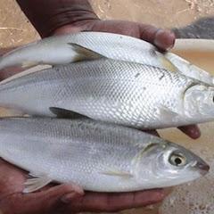 Big Fish Market