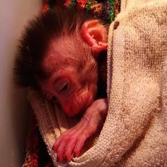 Monkey Baby Channel