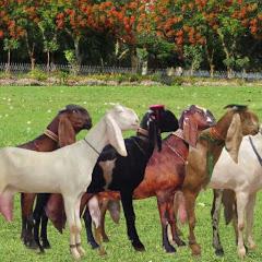 Goat Land Farms
