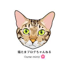 猫たまブログ