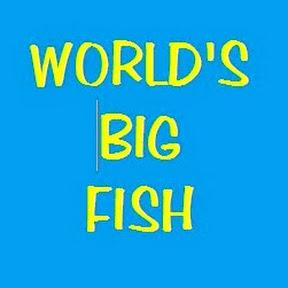 Big Fish of the World
