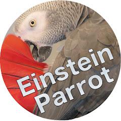 Einstein Parrot