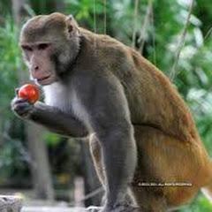 Funny Monkeys Family