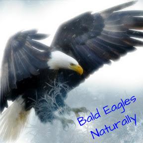 Bald Eagles Naturally