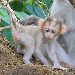Baby Monkey Wildlife