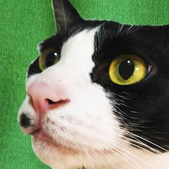 藤村さん/CAT ASMR