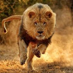 SDA Wild Animals