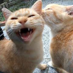 人生はねこだらけ【野良猫を救いたい】