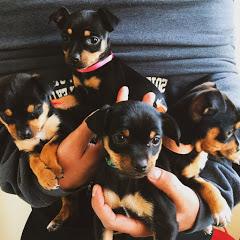 Lola, Luna, Rocky, and Rambo