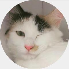이웃집아재 CAT AJAE