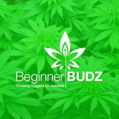 Beginner BUDZ