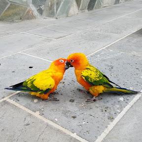 Animals Fight comparison