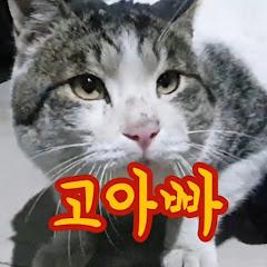 고양이아빠 포차