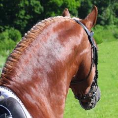 Pferdesportservice