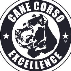 Cane Corso Excellence®️