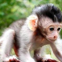 Monkey Wildlife