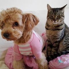 TOTO猫アンドDUFFY犬