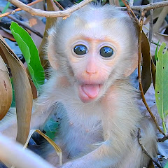 Monkey Dody