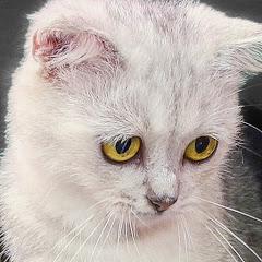 FunCat - Meow Meow