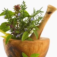Plantas medicinales y sus propiedades curativas