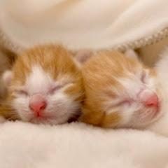 ねおの双子猫。