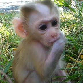 Baby Monkey Christina
