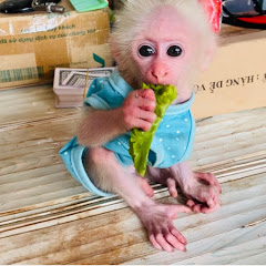 Monkey Baby One