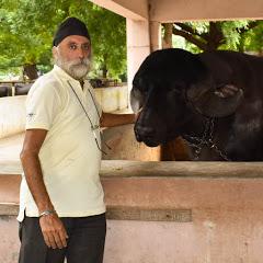 Gurkirpal Singh Dairy Farming