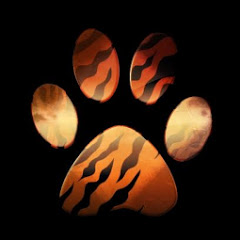 Discover Wild Paws