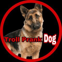 Troll Prank Dog