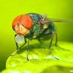 แมลงวัน ข่าว