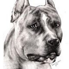 Hazara Dog Breeder