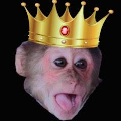 monkey Baby YoYo