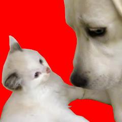 愛犬ベルとK2です