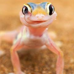 dizzy lizard