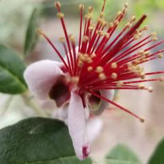 ЛПХ, саженцы редких растений Володько