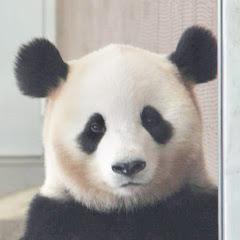 Panda Channel by pomeranian film