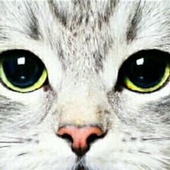 انا قط