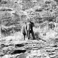 Wildlife Valparai