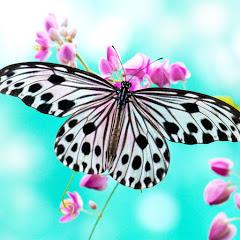 Butterfly Art&Craft