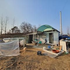 시골 컨테이너 사는 말룡TV