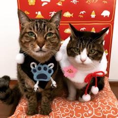 きな猫ちゃんねる kina cat ch